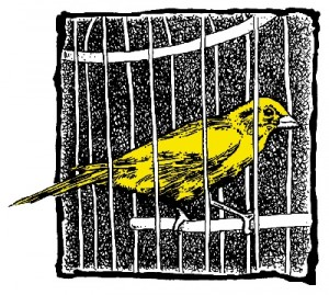 CANARY_color